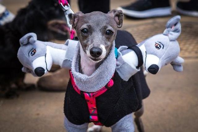 画像: ケルベロスに変身するために犬に似た人形を用意した、努力のコスプレ。