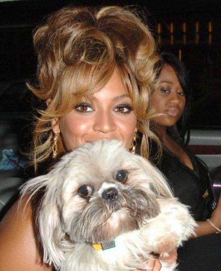 画像: ビヨンセが10年ほど前に飼っていたシーズー犬のマンチー。