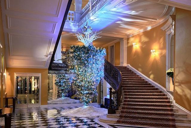 画像1: 真っ逆さまのクリスマスツリー
