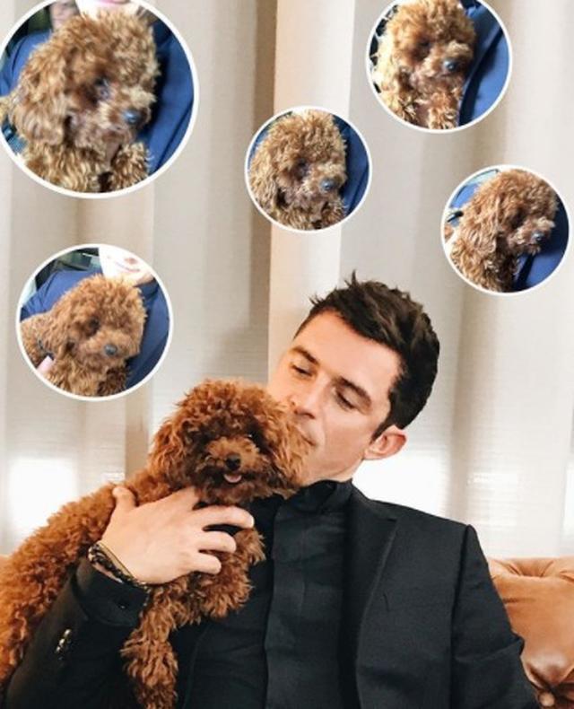 画像9: 癒しの極み!オーランド・ブルームと愛犬の2ショットに心奪われる