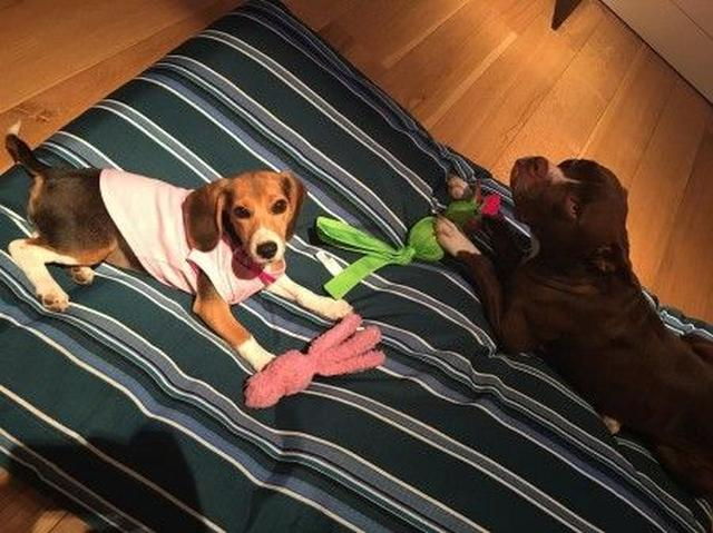 画像: 右が、リアムの愛犬タニ。