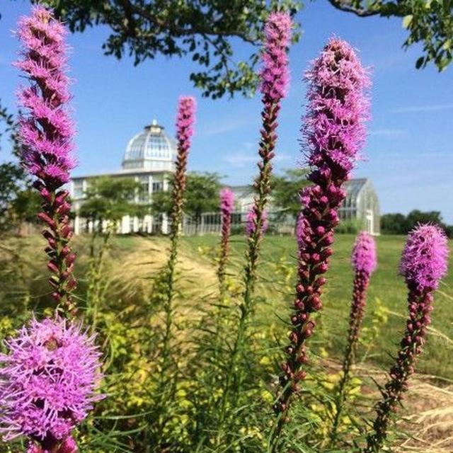 画像1: 世界で起きている悲劇を受け、アメリカの植物園が「助けになるなら」と入園無料に