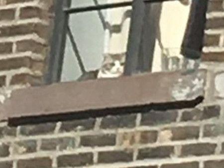 画像: メレディスは窓の端に座り、ファンのほうをじっと凝視。10分ほどにらめっこを続けると飽きたかのように去っていった。
