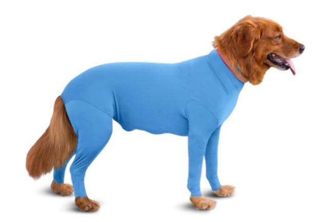 画像: 意外にも画期的!海外で「全身レオタード犬」が増殖している理由って?