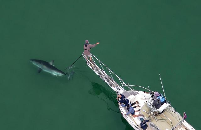 画像2: ある大物の発言で「サメ」に募金が急増する