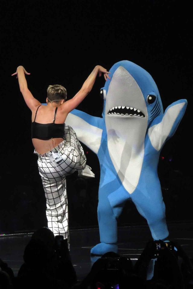 画像3: 「左のサメ」が登場