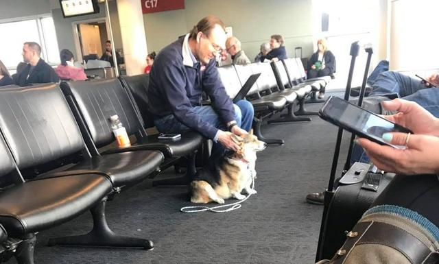 画像1: 空港で見知らぬ男性に寄り添うコーギー犬、その理由に感動