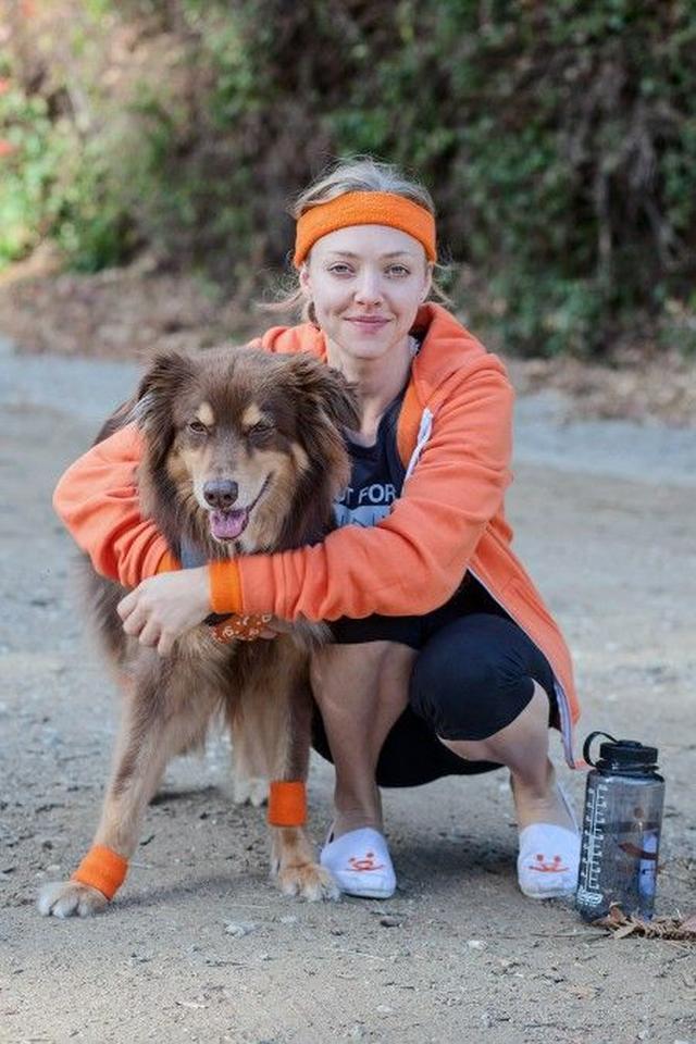 画像6: 『レミゼ』女優のアマンダ・サイフリッドが「犬猫 殺処分ゼロ」運動に参加