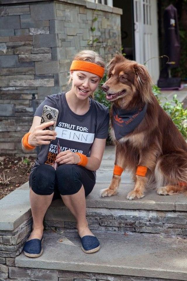 画像1: 『レミゼ』女優のアマンダ・サイフリッドが「犬猫 殺処分ゼロ」運動に参加