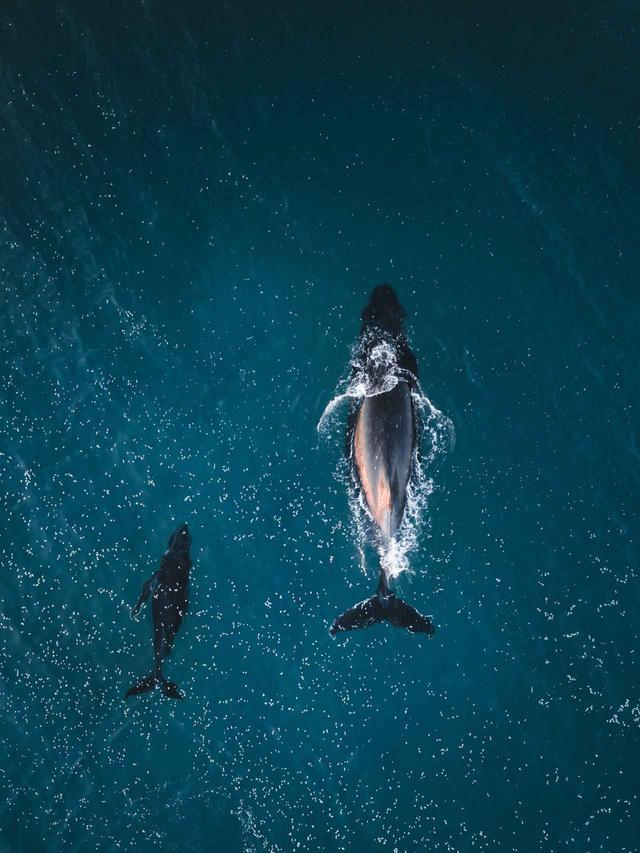 画像1: クジラが作った「奇跡のハート」が素敵なので見てほしい