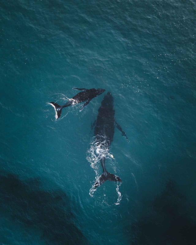 画像3: クジラが作った「奇跡のハート」が素敵なので見てほしい