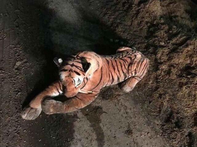 画像3: トラを発見し警察に通報、しかし待ち受けていたのは壮大なオチ