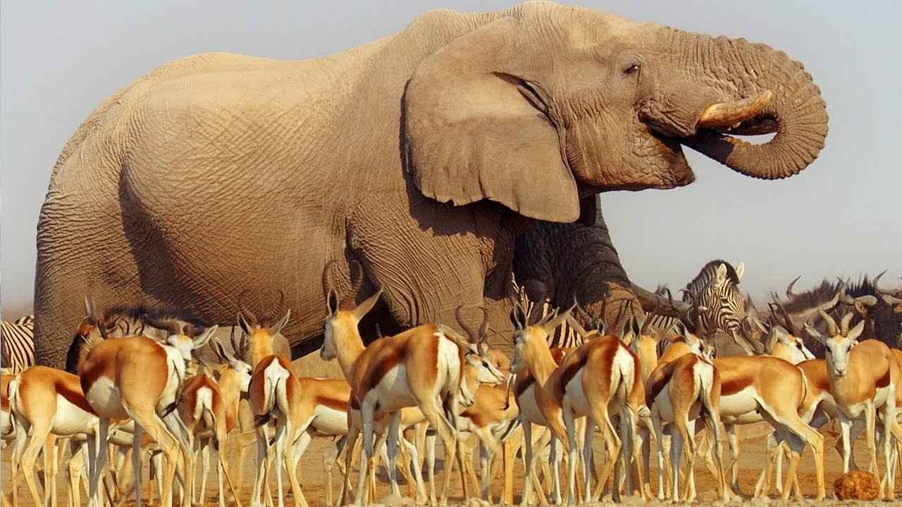 画像: Nature Makes You Happy   BBC Earth www.youtube.com