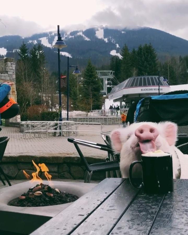 "画像1: ULTIMATE TRAVELING PIG on Instagram: ""Enjoying some apres ski with a hot chocolate in Whistler ☕️⛷ • Rien de mieux qu'un bon chocolat chaud près du feu après une journée de…"" www.instagram.com"