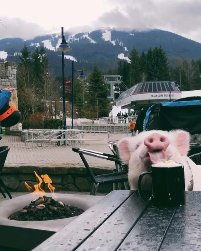 "画像1: ULTIMATE TRAVELING PIG on Instagram: ""Enjoying some apres ski with a hot chocolate in Whistler ☕️⛷ • Rien de mieux qu'un bon chocolat chaud près du feu après une journée de…"" www.instagram.com"