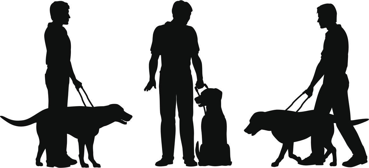 画像2: 盲導犬の頑張りに涙