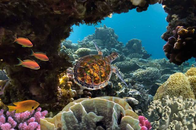 画像2: サンゴに有害な成分を含む日焼け止めの販売を禁止