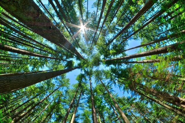 画像1: 6月5日「世界環境デー」に読みたい10個の格言