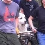 画像: ハイキングに疲れた犬のために救助隊が出動、その姿が「王様のよう」と話題