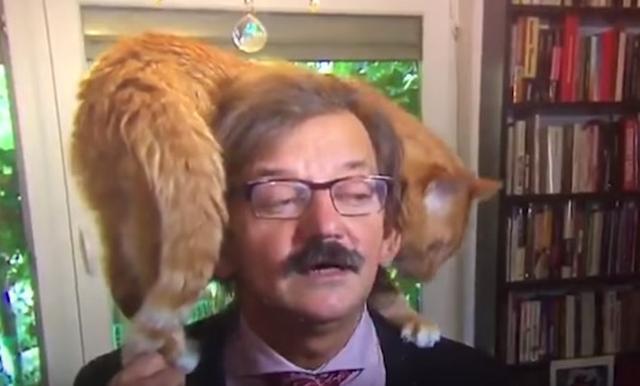 画像2: 超真面目なインタビューに猫乱入!それでも動じない学者と猫の絡みに癒される