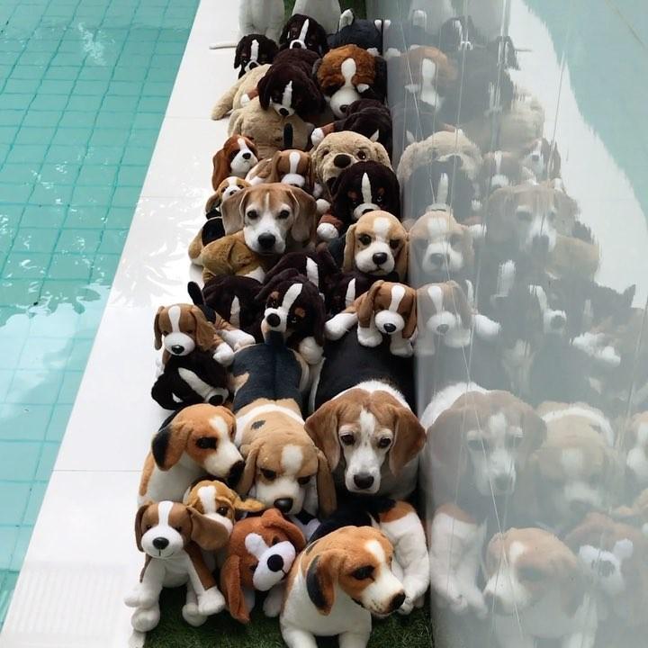画像1: Beagle_duedaanさんはInstagramを利用しています:「Photohunting」 www.instagram.com