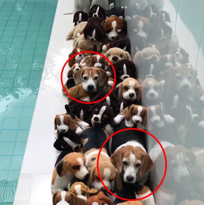 画像: 「本物の犬」は何匹?