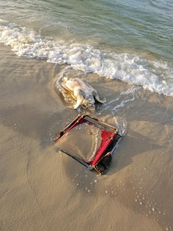 画像: Fort Morgan Share the Beach www.facebook.com