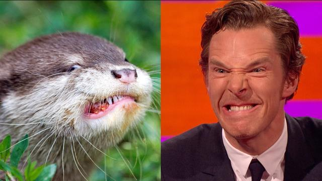 画像: Benedict Cumberbatch's resemblance to an otter – The Graham Norton Show: Series 18 Episode 9 – BBC www.youtube.com