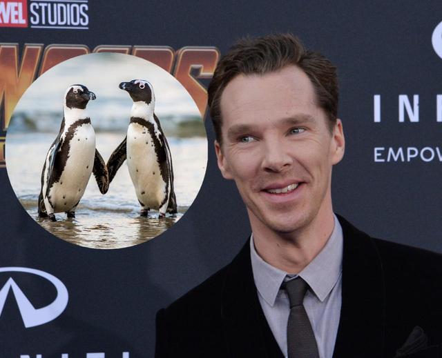 画像: 「ペンギン」が言えない