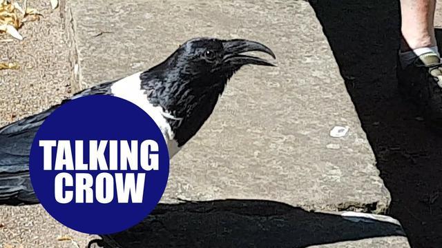 画像: Crow which bizarrely asks bypassers 'You alright love?' - in Yorkshire accent www.youtube.com