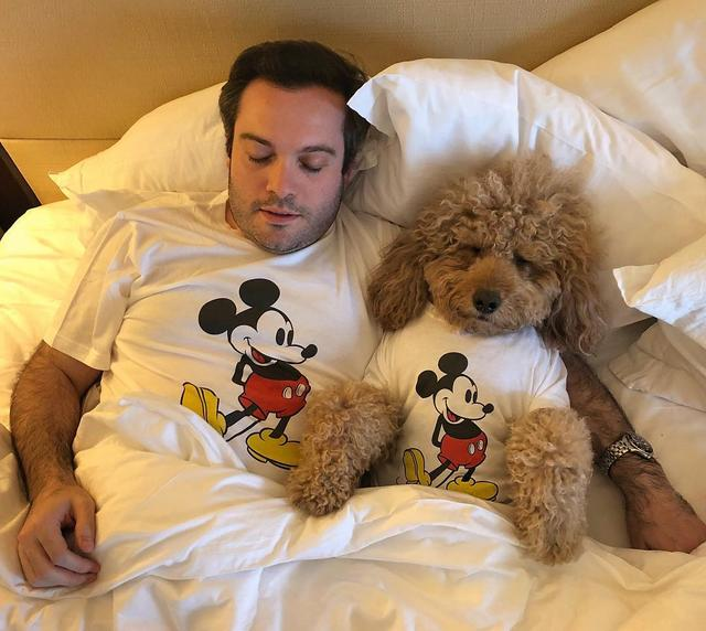 画像1: Samson The Goldendoodle (f1b)さんはInstagramを利用しています:「'The Happiest Place on Earth'  #BED  #allyouneedislove  #sleepyheads」 www.instagram.com