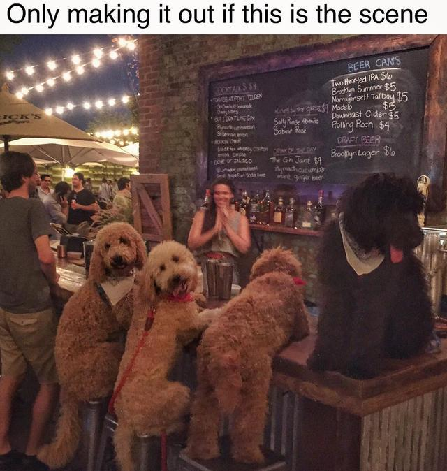 画像1: Samson The Goldendoodle (f1b)さんはInstagramを利用しています:「Find me all the dog friendly bars & awesome barktenders this summer!  #wbw #itsadogsworld  #dogsofnyc  #summervibes」 www.instagram.com