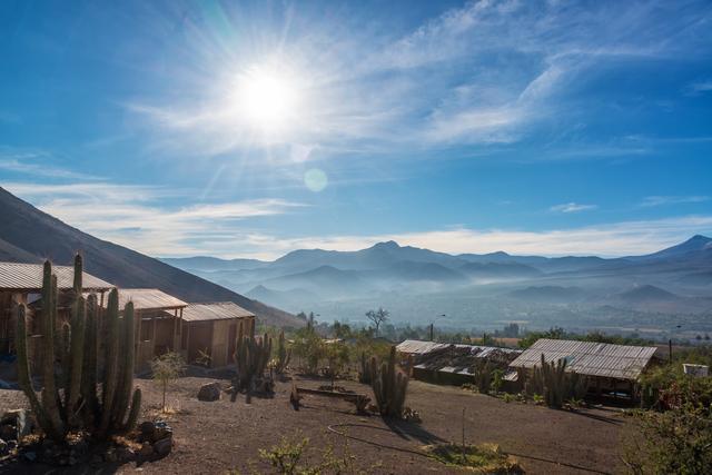 画像: ビクーニャ(チリ)