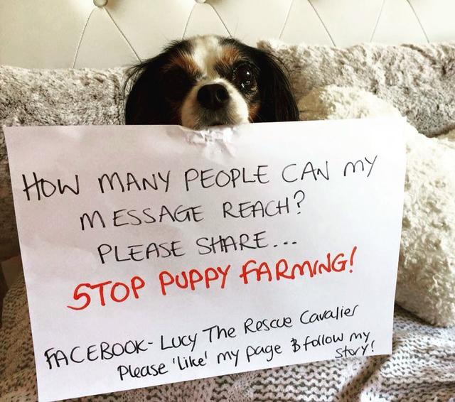 "画像1: Lucy The Rescue Cavalier on Instagram: ""Please will you help me spread my message <3 Sometimes it seems there is no light at the end of the tunnel, please keep helping us &…"" www.instagram.com"