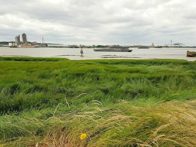 画像: レインハム・マーシズ自然保護区のテムズ川の三角江の一角。 www.instagram.com