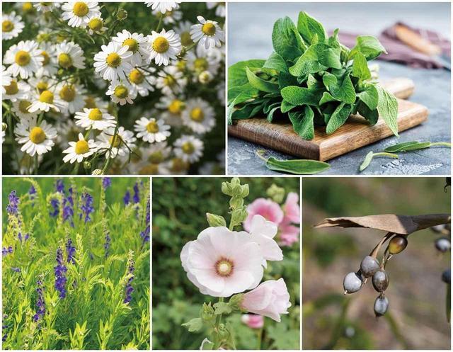 画像3: 植物の力をプラス! 肌に優しい「ボタニカルミセラー」 に注目♡
