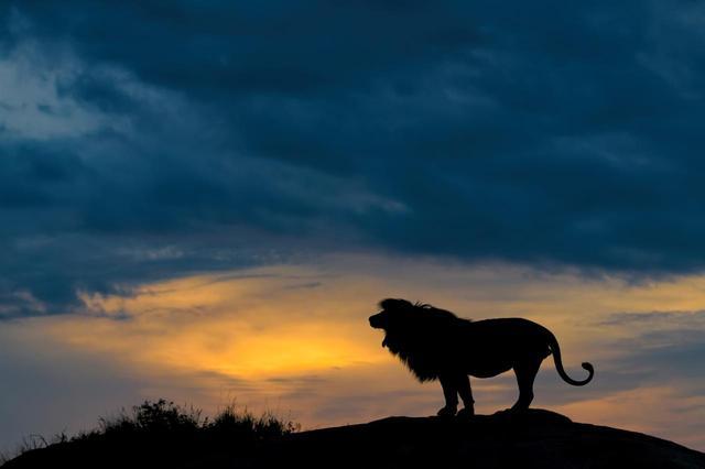 画像3: リアル『ライオン・キング』な瞬間を激写