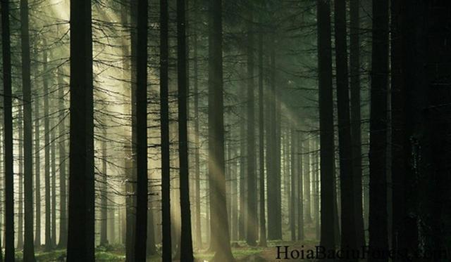 画像: hoiabaciuforest.com