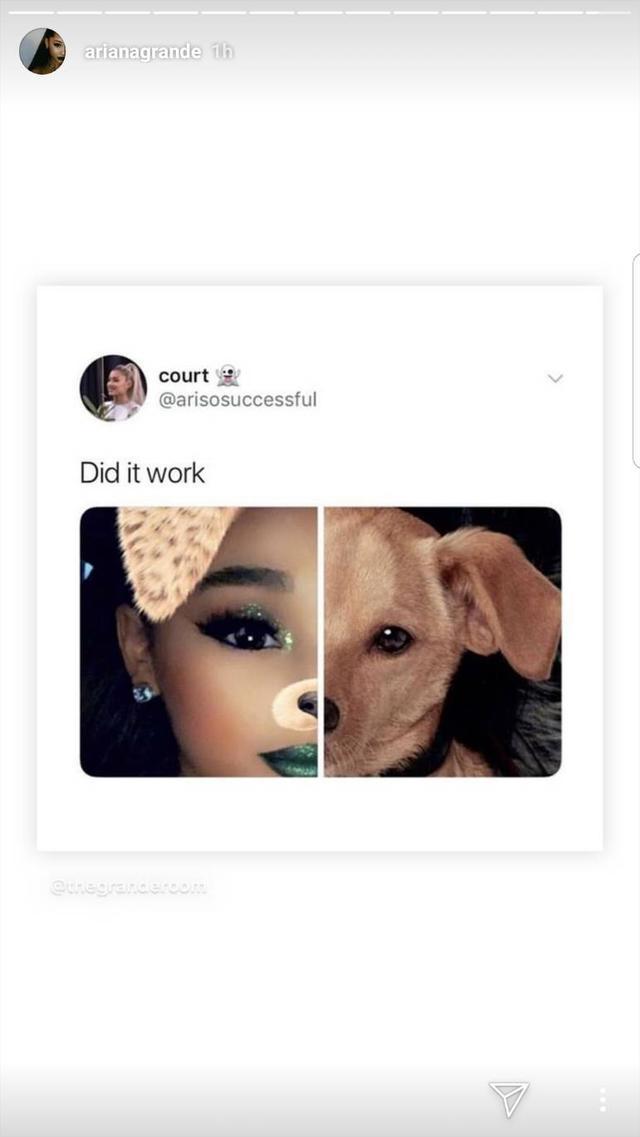画像2: アリアナ・グランデ、愛犬と似ている?ある写真が証明する「飼い主と犬は似る」説