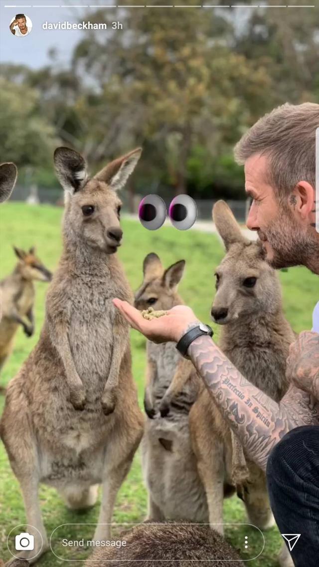 画像4: デビッド・ベッカム、イケメン×動物は無敵ということを証明