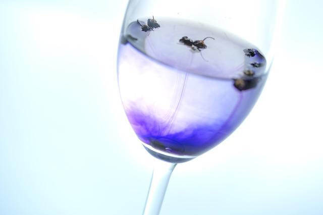 画像5: 青いお茶「モンゴリアンベリーティー」で、飲むエイジングケア!