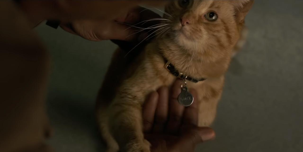 画像1: 「猫」の持つとんでもない可能性