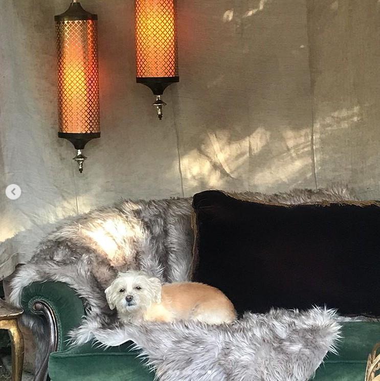 画像: ヴァネッサの愛犬もテントの中でちょこんと参加。