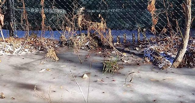 画像2: ワニの冬眠の方法がワイルドすぎてドン引き