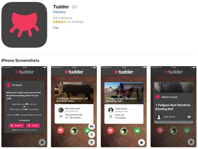 画像1: マッチングアプリ「ティンダー」の牛向けバージョンが人気
