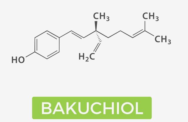 画像2: 「バクチオール(bakuchiol)」とは?
