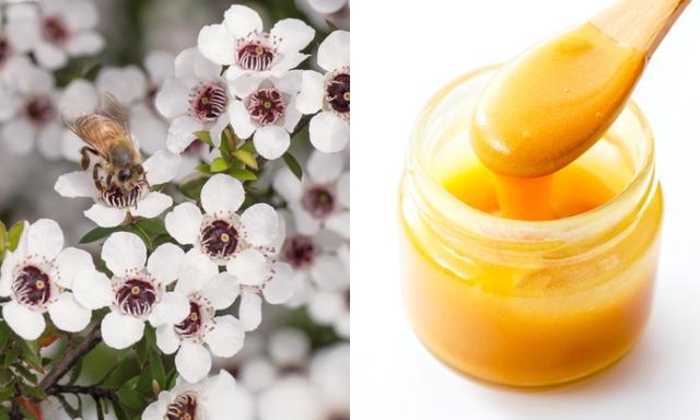 画像: マヌカの花(左)とマヌカハニー(右)。