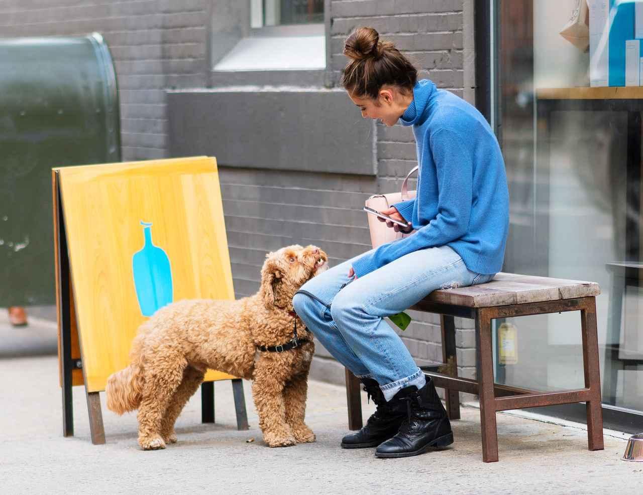 画像4: 溺愛する愛犬とブルーボトルコーヒーへ