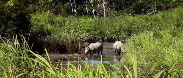 画像3: 40年間苗を受け続けた男性、荒地が東京ドーム118個分の森林に【環境デー】