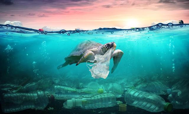 画像1: 他人事じゃないプラスチックのゴミ